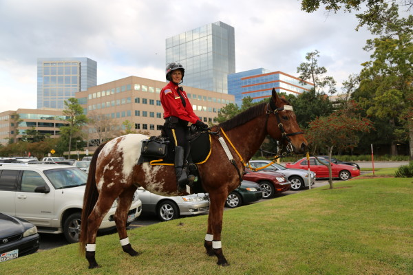 A Mounted Patrol Trooper in The Woodlands, Texas